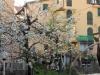 010-primavera